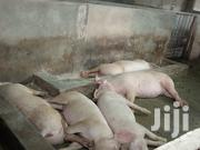 Pigs For Sale | Livestock & Poultry for sale in Dar es Salaam, Kinondoni