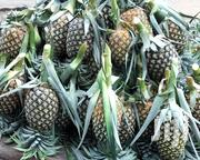 Pineapple Fruit's | Meals & Drinks for sale in Pwani, Bagamoyo